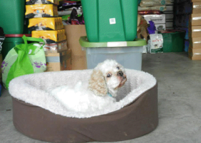Dog in its warm bed.