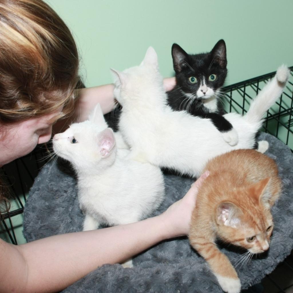 NC-Kittens-1