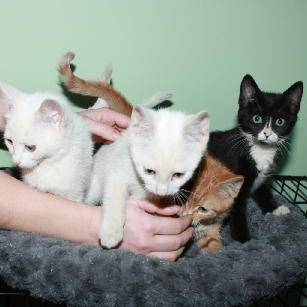 NC-Kittens-2