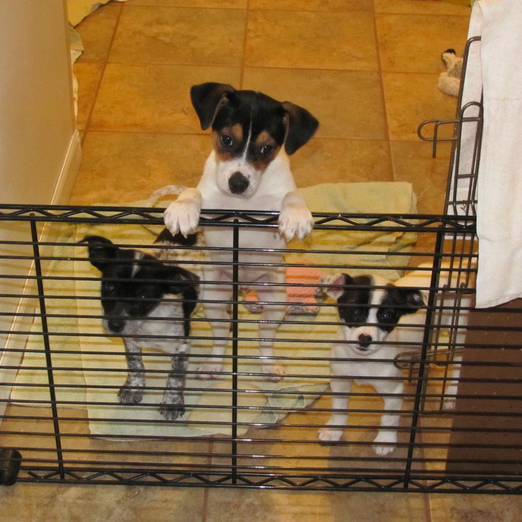 Puppy-threepack
