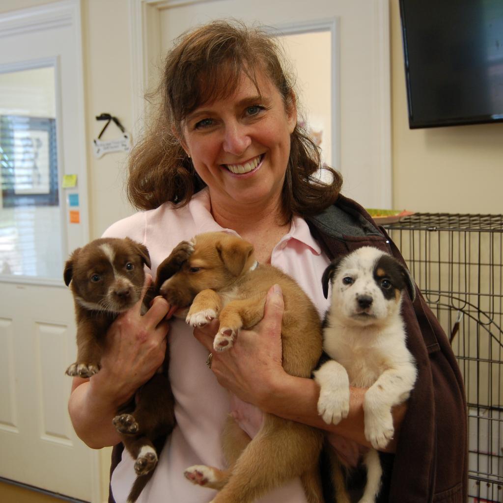 Three-Puppies-1