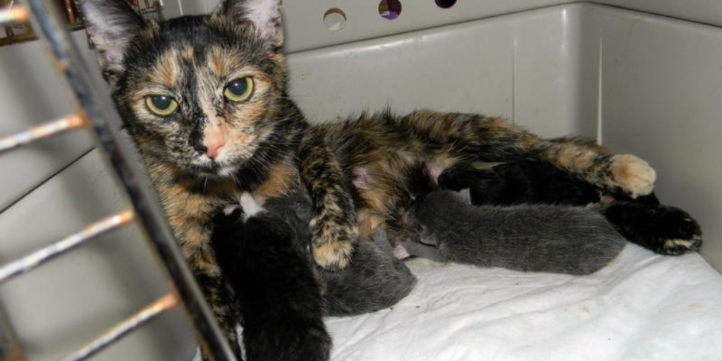 Tilly and babies